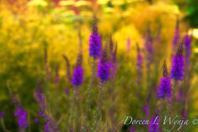 Purple Magesty_001