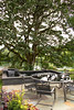 Quercus garryana Outdoor living_003