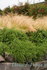 Rosmarinus officinalis 'Prostratus' - Nassella tenuissima - Fuchsia magellanica - retaining wall_1960