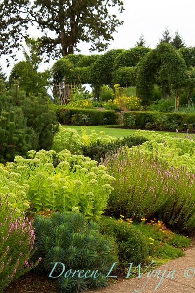 Sedum Evergreen Landscape_003