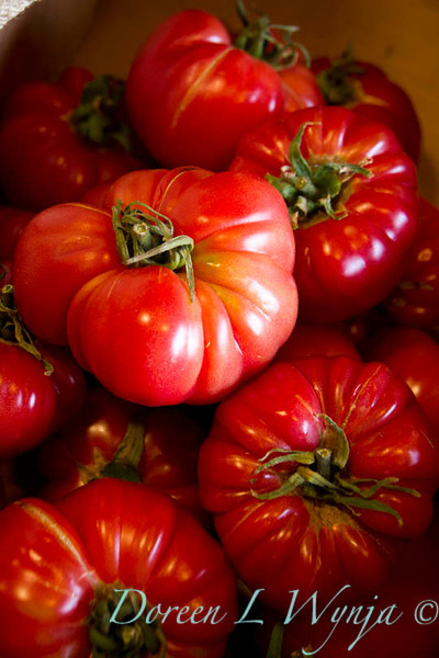 Solanum lycopersicum Costoluto Genovese_001