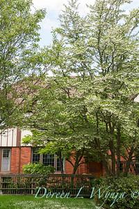 Styrax japonicus_8675