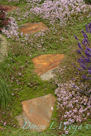 Thymus pseudolanuginosus_002_Doreen Wynja