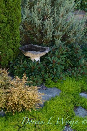 Thymus Archers Gold landscape_0908