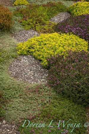 Thymus groundcover_876-2