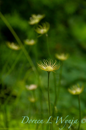 Flower calyx_2767