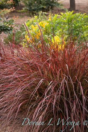 'Rubra'; Hawaii Birdcatching Sedge; New Zealand red hook sedge; oranamental grass; stans; Tecoma; Uncinia; Uncinia uncinata