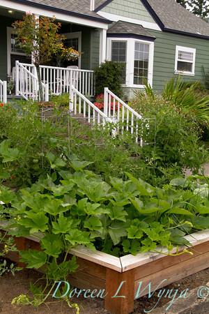 Urban vegetable garden_027