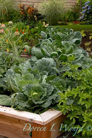 Urban vegetable garden_022
