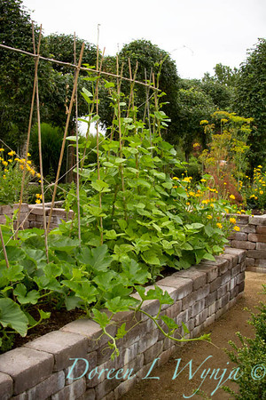 Urban vegetable garden, with a stacked paver raised bed; veggie garden; garden support trellis of bamboo stakes for runner beans, squash playing in the foreground