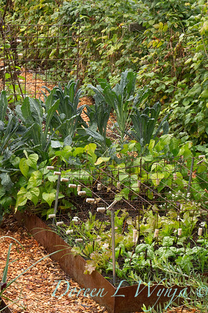 Urban Vegetable Garden_3698AMG