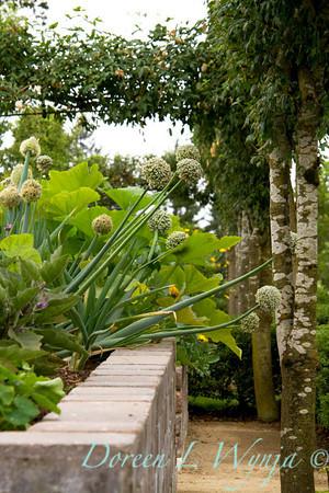 urban vegetable garden - stacked paver raised bed - veggie garden - onion flower heads - garden support -  trellis bamboo