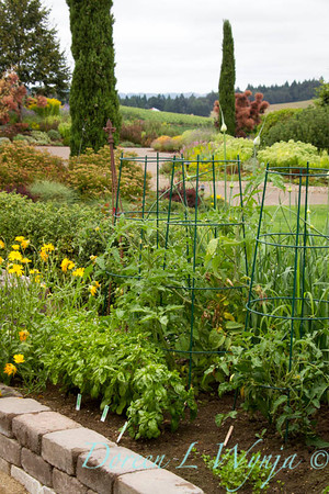 Urban vegetable garden in a stacked paver raised bed; veggie garden with tomato cages; garden support