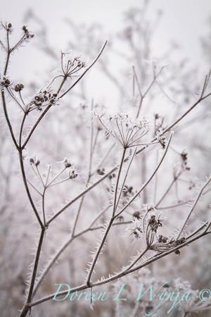 Winter frost_9328