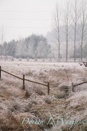 Winter frost_9438