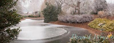 Monrovia winter frost landscape_9289