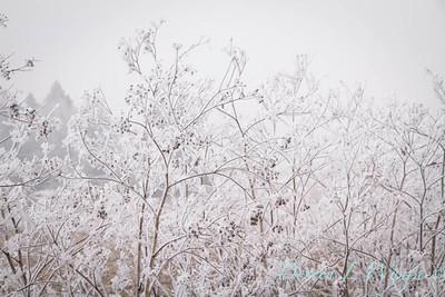 Winter frost_9333