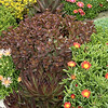 Succulent garden_2594