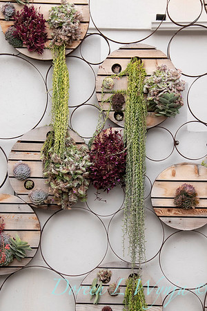 Succulent living wall_4584