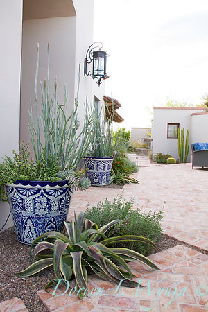 x Mangave 'Espresso'; Scott Calhoun designer southwestern landscape; large blue and white Mexican pottery containers with succulents in a patio setting; herringbone pattern brick patio
