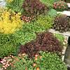 Succulent garden_2598
