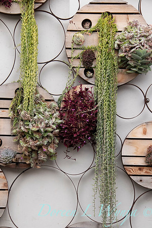 Succulent living wall_4587