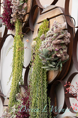 Succulent living wall_4595