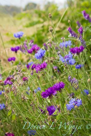 Wildflowers_598