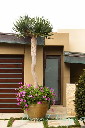 Yucca elephantipes_007