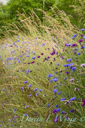 Wildflowers_609