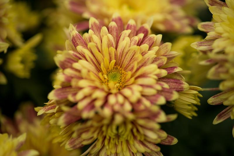 11-11-15  Mum - Fern Room - Longwood Gardens-44