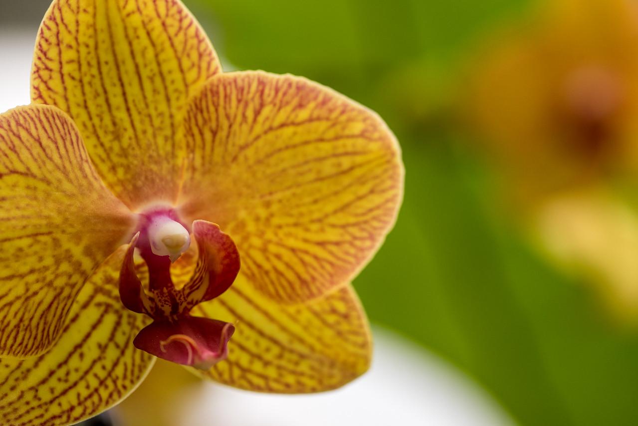 1-22-16 Orchid Extravaganza-317
