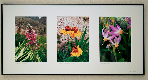A trio of matted and framed 5 X 7 inch prints of High Sierra Wildflowers. The finished frame is 10.25 X 20.25 inches. Left to right are Elephant Heads (if you look real close you can see their ears and trunk), Bigelow Sneezeweed taken in the Wonder Lakes area of John Muir Wilderness, and Shooting Stars. The Elephant Heads and Shooting Stars were both taken on Darwin Bench in Kings Canyon. Custom flower selection available for the same price of $25.