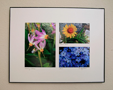 A framed trio of High Sierra wildflowers. Shown are a 5 X 7 inch print of Shooting Stars, and 3 X 4.5 inch prints of Alpine Gold and Phlox. The finished frame is 11⅛  X 14⅛. Custom flower selection available for same price. The Shooting Stars were photographed at 11,200 feet on Darwin Bench in Kings Canyon National Park. The Alpine Gold was taken on Lamarck Col at 12,880 feet, and the Phlox was taken at 4,500 feet up Rancheria Creek from Hetch Hetchy in Yosemite. I have one of these hanging in my own bathroom. $25.
