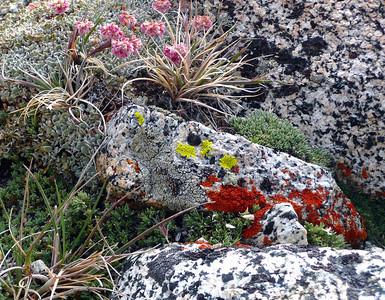 Getting Small - Lichen on Granite