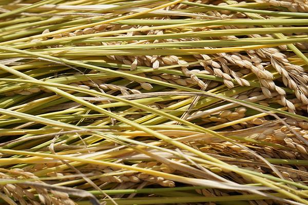 Harvest Series (3)