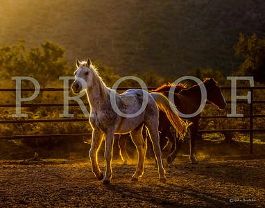 White Stallion Ranch January 2012