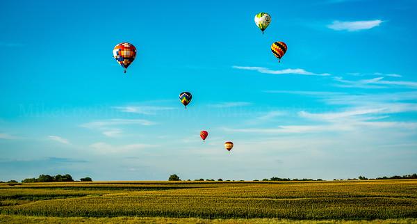 Field of Balloons