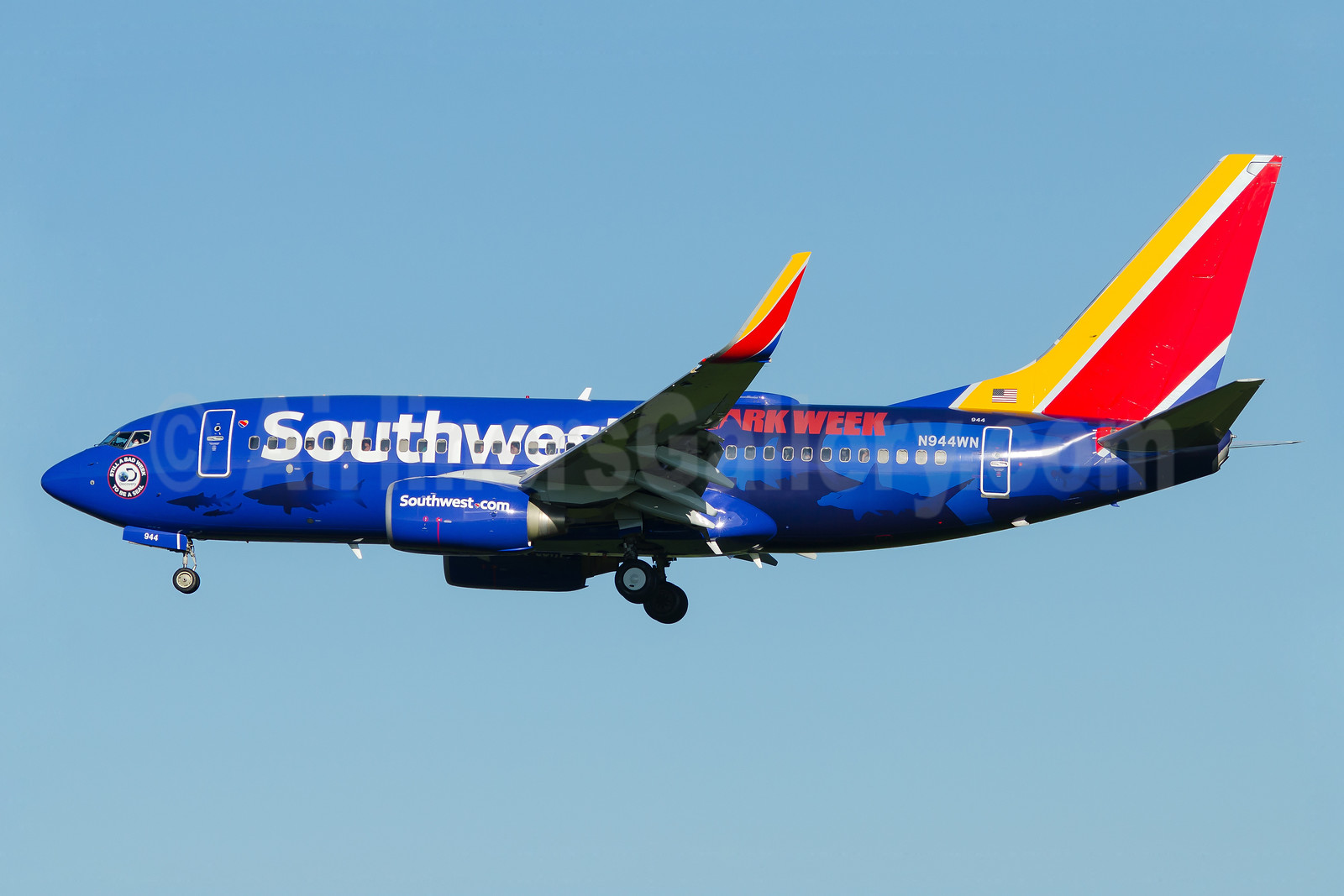 "Southwest's 2017 ""Shark Week"" promotional livery"