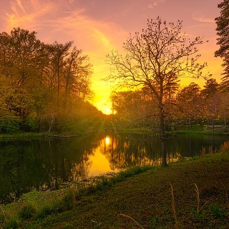Sunrays Ricks Pond