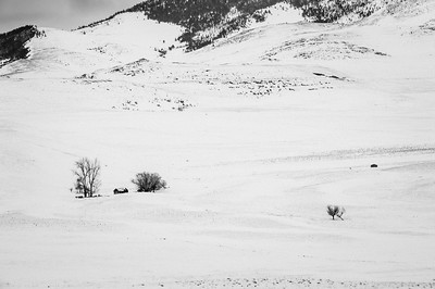 Middle of Nowhere -  Camas Prairie, Montana