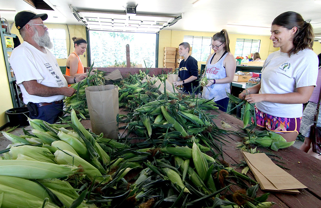 . Gove Farm workers shown here grading fresh picked corn, L-R, Jeffrey Carter (full time worker), rest summer help, Nicole Chiumento, Chloe Revell, Marykate Morrissey, and Amanda Mills. SEN/David H. Brow