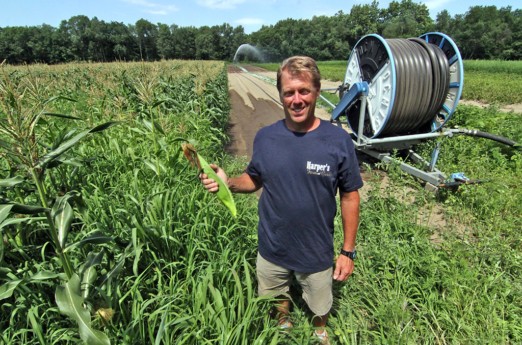 . Dave Harper owner of Harper Farms in Lancester, shown here in one of his corn fields with huge irragation system watering in back. SEN/David H. Brow