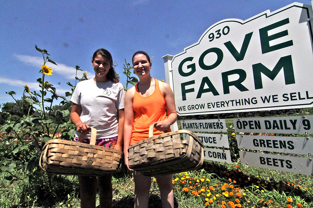 . Co-workers at Gove Farm in Leominster L-R, Nicole Chiumento 21 and Amanda Mills 20 (both are friends and former class-mates), ready to gather crops. SEN/David H. Brow