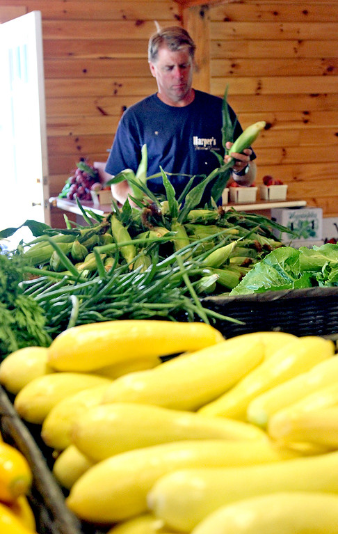 . Dave Harper owner of Harper Farms, checks out some of the fresh picked corn in his Lancester farm. SEN/David H. Brow