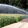 Water spray from the gaint irragation system on Harper Farm in Lancester waters the corn. SEN/David H. Brow