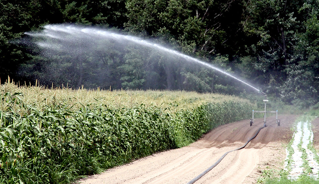 . Water spray from the gaint irragation system on Harper Farm in Lancester waters the corn. SEN/David H. Brow