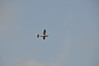 Hot AIr Balloons 009 09 01 2013