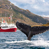Whales & Penguins of Francisco Coloane Marine Park, Patagonia