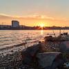 Sonnenuntergang am Rhein in den Rheinauen in Beuel